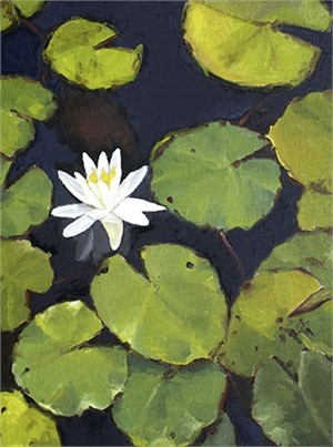 Awakening Water Lily