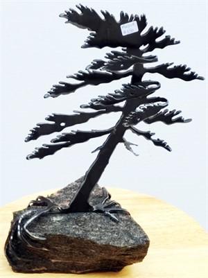 Dancing Pine, 3114