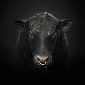 Black Bull by Randal Ford