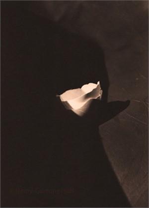 Egg Shadow