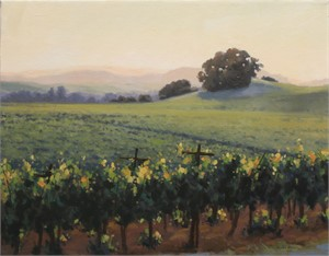 Evening Light in the Vineyard, 2017