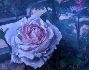 Petit Garden Rose