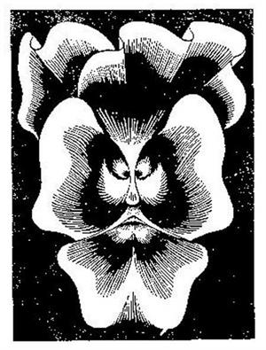 Flor de Pascua - La Pensee, 1921