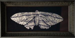 Moth (1/20), 2018