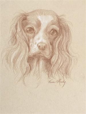 Cavalier Spaniel drawing