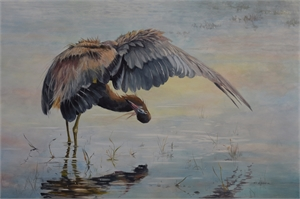 Fishing Reddish Egret, 2020