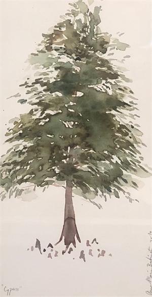 Swamp Cypress, 2019