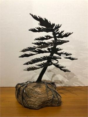 Dancing Pine, 3127