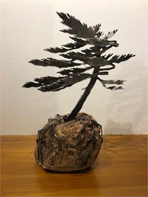 Dancing Pine, 3110