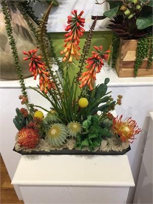 Seuss Garden - Protea,Tritoma,Crested Barrel Cacti,Billy Balls #5, 2019