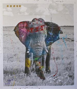 Tembo 5 (1/6), 2012