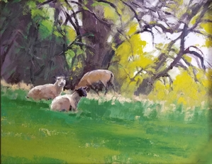 Sheep Basking in the Shade