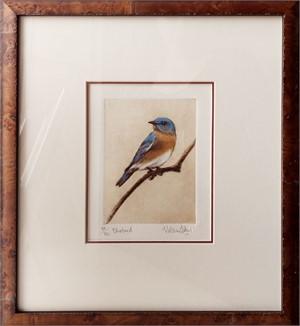 Bluebird_F