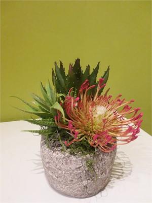 Fiesta -   orange protea, agave and mini agave in hypertufa pot #8035, 2019