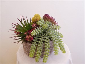 Treasure Chest - Hanging Sedum, Yucca, Aloe, Aeonium, Red Sedum, Billy Balls  #30, 2019
