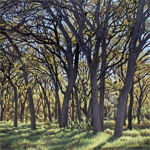 Onion Creek Park Trees I