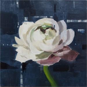 White Ranunculus Study
