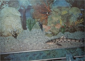 Mexico City Restaurant - Fish Tank With Shark (wrapped & painted sides), 2008