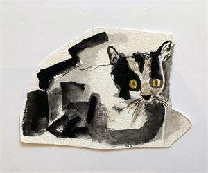 Black Cat, 2019