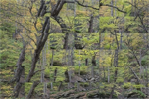 Forest, Kaaterskill, New York X 36, 2018