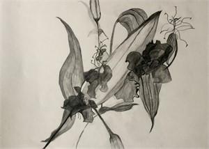 Black Orchid, 2018