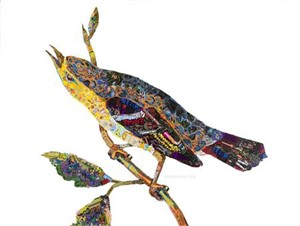 of America: Blue Mountain Warbler, 2018