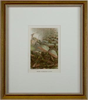 Swarm of Migratory Locusts, 1885