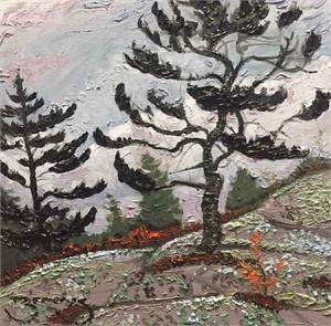 Haggart Bay Pine