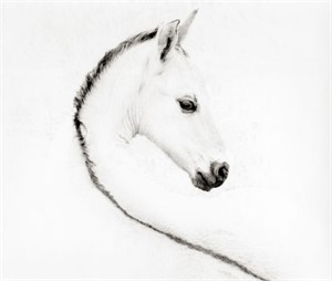 "The Foal - Framed 39"" x 43"" - White Frame (109/200)"