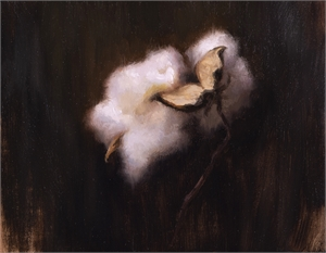 Cotton V