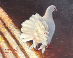 White Dove 18