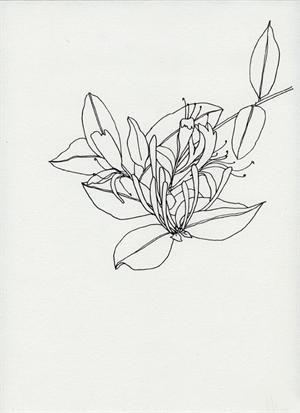 Untitled Botanical, 2015