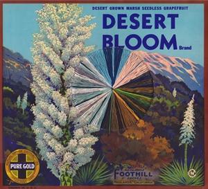 Desert Bloom, 2020