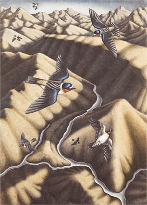 Cliff Swallows II (/1)