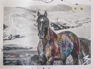 The Stallion (1/20), 2014