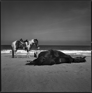 Man with Horses by Kevin Greenblat