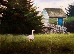 Island Goose