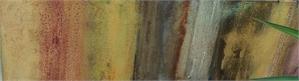 Agave Path Series III