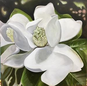 Lewis Ginter Magnolia