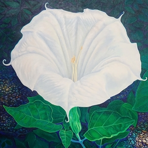 Jimson Weed Bloom by John Van Sickel