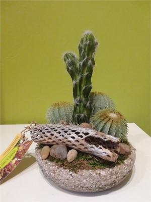Roundabout -  Peruvian Cactus, barrel cactus and cholla in hypertufa bowl  #2832, 2019