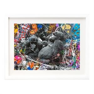 Gorilla Family (1/20), 2019