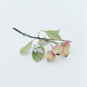 CRABAPPLE BRANCH WITH LEOPARD MOTH, 2013