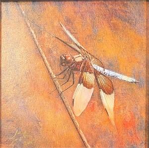 Dragon Fly-White