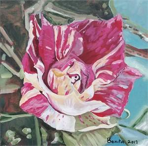 Variegated Rose, 2017