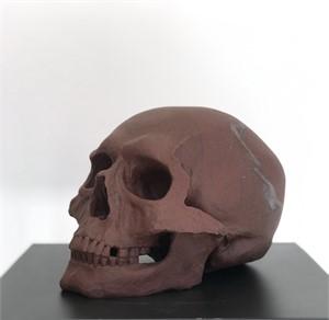Human Skull II