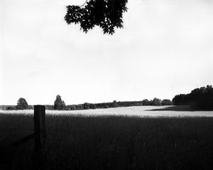 (#416) Upper Field, MacArthur Farm by Frank Hunter
