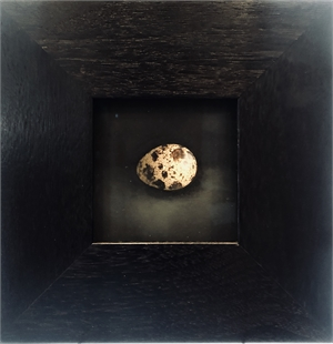 Quail Egg 37 (2/5), 2019