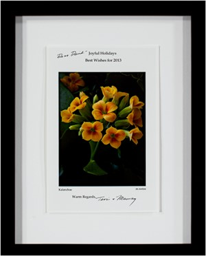 Kalanchoe (2012 Holiday Greeting Card), 2012