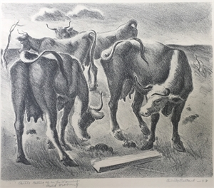 Cattle Getting Up, Cold Morning, 1943